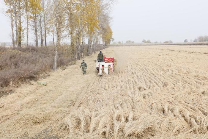 贝博官网生态农业 舒兰稻米基地